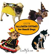 Dog Minion Halloween Costumes Amazoncom Paper Magic Group Dog Riders Cowboy Pet Costume Pet
