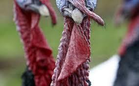 thanksgiving turkey shortage talking turkey there are enough birds to go around the wichita