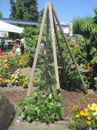 good idea need to add chicken wire to my pea bean trellises