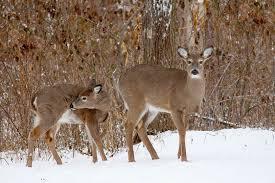 deer resistant edibles for your garden organic gardening blog