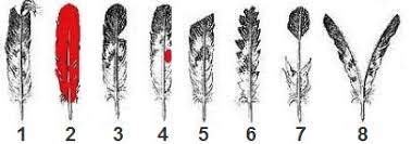 headdress feathers and meanings indian tribes for