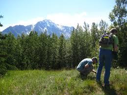 native plants in the tundra emily fay capelin clm internship program blog