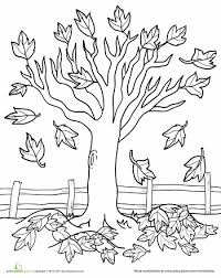 maple tree coloring fall trees worksheets leaves