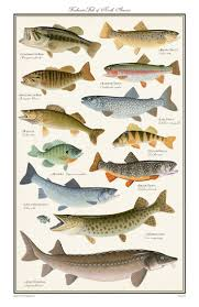 Freshwater Fish 68 Best Fish Identifier Charts Images On Pinterest Fishing Stuff