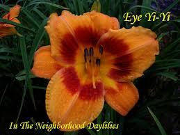 Reblooming Daylilies Daylily Daylilies Starting With E Pictured Daylilies Award Winning