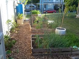 my backyard coturnix coop and urban farm backyard chickens