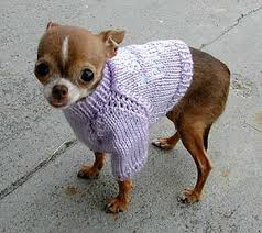 pet clothing for chihuahua puppies pet world