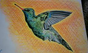 the hodge podge gallery bird drawings