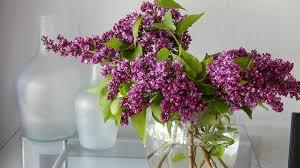 Log Vases Flower Vase Free Pictures On Pixabay