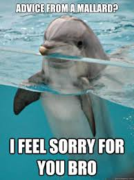 Funny Miami Dolphins Memes - 47 most funny dolphin meme pictures and images that will make you
