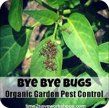 Garden Pests Identification - great vegetable garden pests and diseases identifying 5 common