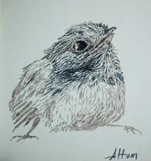 artiqueryrose baby bird sketch in ink