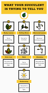Succulents That Don T Need Light How To Take Care Of Succulents Growing And Planting Succulents Tips