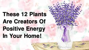 How To Clear Negative Energy 12 Plants That Create Positive Energy In Your Home