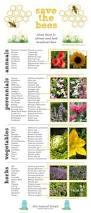 best 25 bee friendly plants ideas on pinterest bees bee