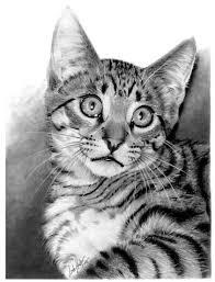 imagenes a lapiz de gatos dibujos hechos con lapiz impresionantes hechos gato y lápiz