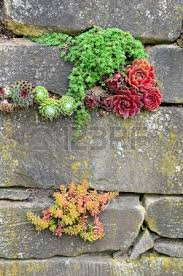 plants growing out of old garden wall stock photo picture and