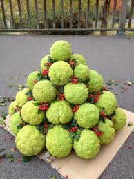 what to do with hedge apples hedge apple trees outdoor