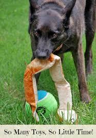 australian shepherd training tips dog training tips and pet appreciation week