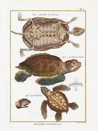 bonnaterre reptile prints turtle prints frog prints snake