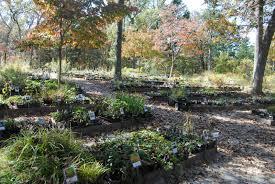 plants native to missouri around columbia missouri wildflowers nursery
