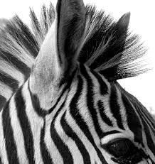 Picture Of Black And White by Black And White Pic 39 Wujinshike Com