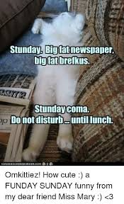 Newspaper Cat Meme - 25 best memes about sunday funny sunday funny memes