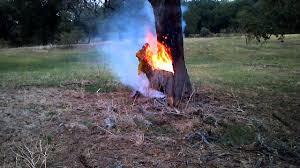 lightning struck tree burning from inside