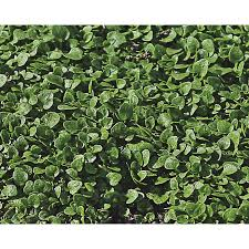 home depot black friday ads 32250 shop herb plants at lowes com