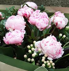 peonies delivery peonies sydney delivery pink peony flowers for everyone