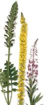 flowering plants flowering plants for kids dk find out