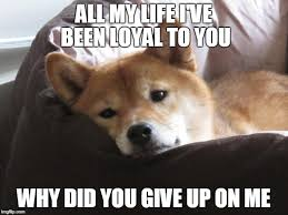 Create Your Own Doge Meme - sad doge meme generator imgflip