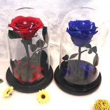 preserved roses the prince glass cover preserved flower immortal