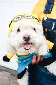 Dog Minion Halloween Costumes Diy Minion Costume Minion Halloween Costumes