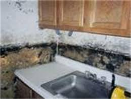 mold under kitchen sink black mold in kitchen sink drain room image and wallper 2017