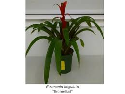 selecting the right house plant could improve indoor air