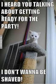 Funny Kitten Memes - funny kitten meme