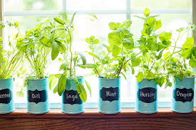 window herb harden how to make an indoor window sill herb garden the gracious wife