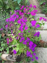 San Francisco Flower Garden by Trying Poki And Visiting The San Francisco Botanical Garden