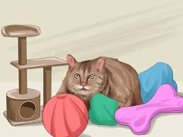 how to get your cat to like you 13 steps with pictures