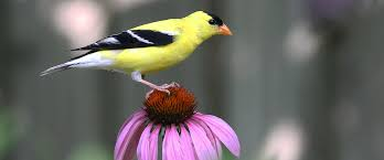 long island native plant initiative bird friendly communities audubon north carolina