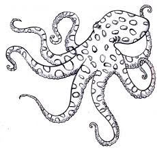 simple octopus drawing simple octopus drawing sketch coloring page