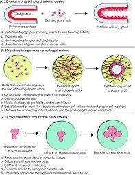 biomaterials based strategies for salivary gland tissue