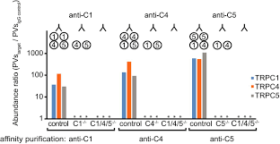 heteromeric channels formed by trpc1 trpc4 and trpc5 define