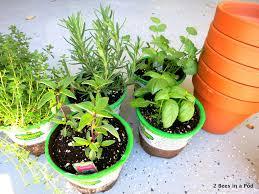 diy herb garden diy herb garden 2 bees in a pod
