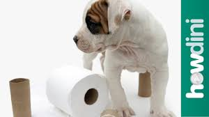 how to potty train a puppy how to house train your dog youtube