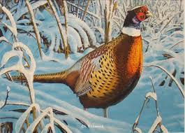 Minnesota wild animals images Minnesota wildlife artist steve hamrick 39 s web site and virtual 713_R