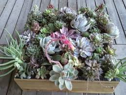 create your own wall succulent hanging planter francesca filanc