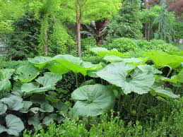 native plants of japan fukuoka u0027s food forest u2013 eric toensmeier