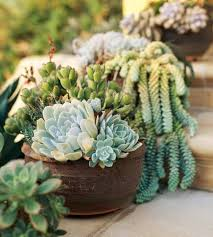 Large Succulent Planter So Easy Succulent Container Gardens Midwest Living